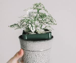 green, indoor plant, and nature image