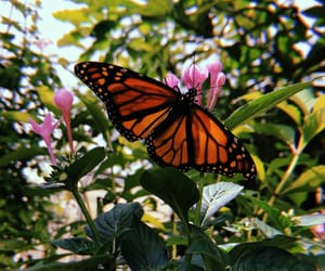aesthetic, black, and butterfly image