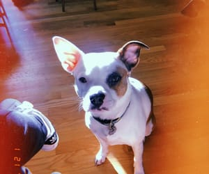 bulldog, puppy, and dog image