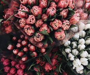 flowers, bouquet, and tulips image