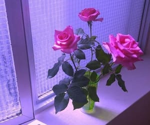 aesthetic, purple, and rose image