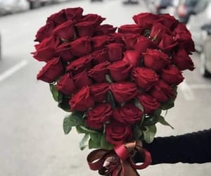 roses, rot, and розы image