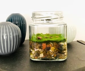 fragrance, houseplants, and homedecor image
