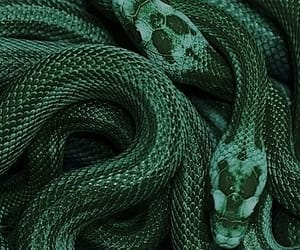 snake, green, and aesthetic image