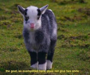 goat, funny, and cute image