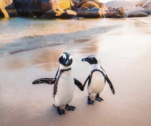 animal, penguin, and beach image