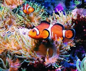 anemone, aquarium, and colorful image