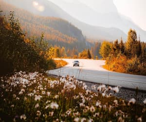 adventure, driving, and flowers image