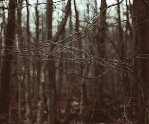 forest, new england, and winter image