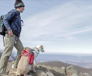 dogs, hiking, and rocks image