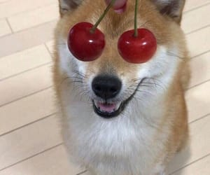 dog, cherry, and animal image