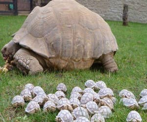 animals, tortoise, and turtle image