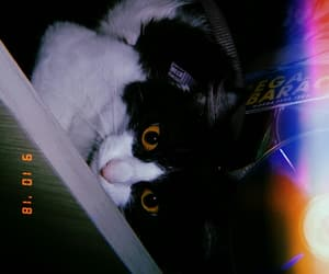 amarelo, beautiful, and cat image