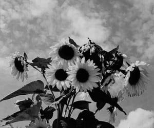 background, bw, and flowers image