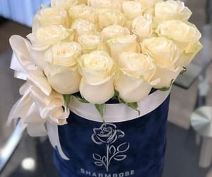 beautiful, colors, and roses image