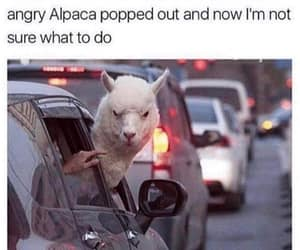funny, lol, and alpaca image