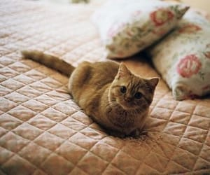 cat and tumblr image