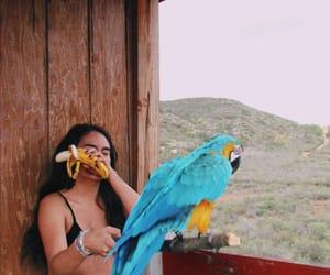 beach, photography, and swim image