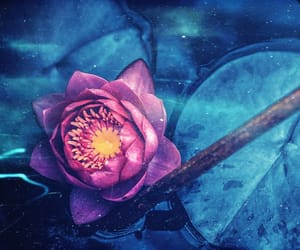 deep purple, flowers, and lilypads image