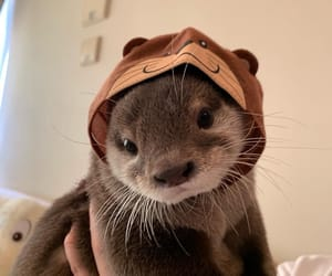 adorable, nutria, and hermoso image