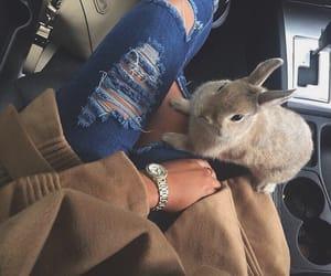 fashion, rabbit, and animal image
