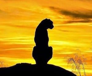animals, lion, and sunset image