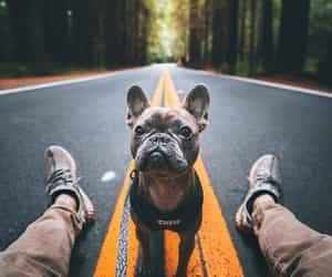 dog, explore, and nature image
