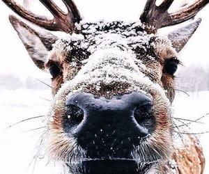 animal, snow, and winter image