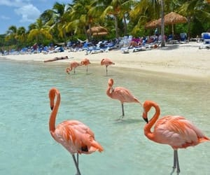 beach, summer, and flamingo image