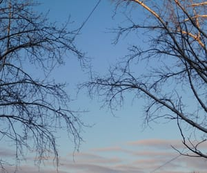 blue, branches, and scenery image