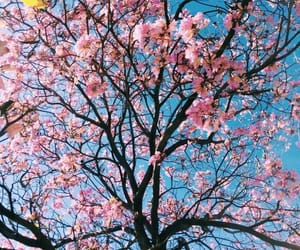 blue, nature, and pink image