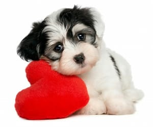 dog, puppy, and heart image