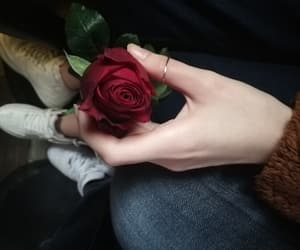 red, rose, and valentine image