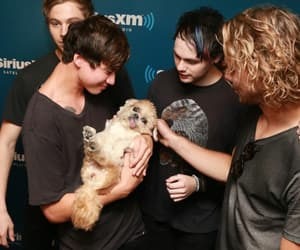 dog, throwbacks, and five seconds of summer image
