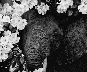 animal, elephant, and elefante image