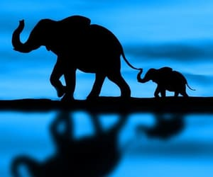 elephant and blue image