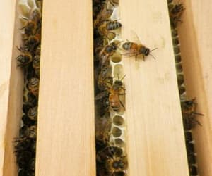 bee, honey, and beekeeping image