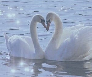 Swan, aesthetic, and blue image