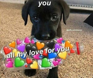 heart, puppy, and Valentine's Day image