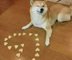 dog, love, and meme image