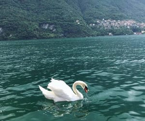 beautiful, place, and Swan image