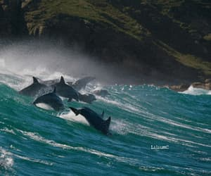gif, nature, and delfini image