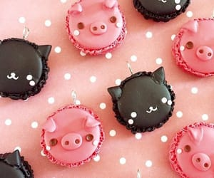 wallpaper, cat, and pig image