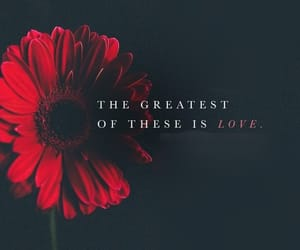 adore, quote, and love image