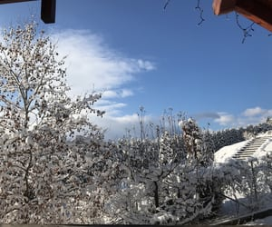 home, snow, and Sunny image