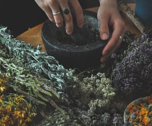 herbs, witch, and witchcraft image