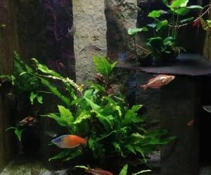 aquarium, copyright, and fishes image