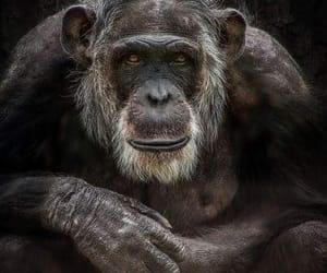 monkey, singe, and nature image