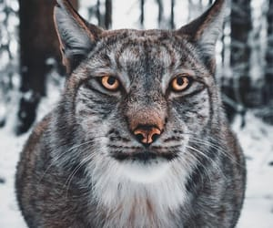 animal, lynx, and vertical image