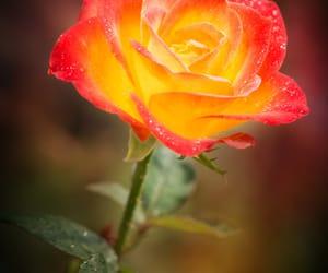 beautiful, blossom, and closeup image